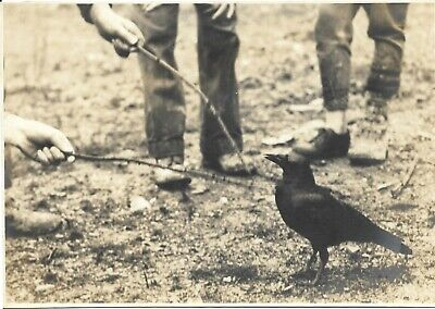 vintage abstract photo out of frame boys hand feet poking black bird with stick