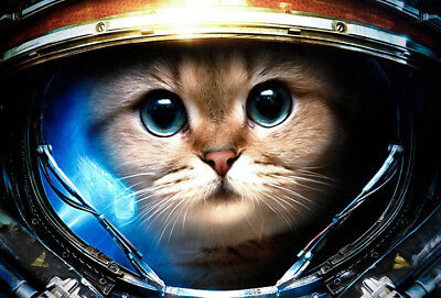 Space Cat * Quality Canvas Art Print