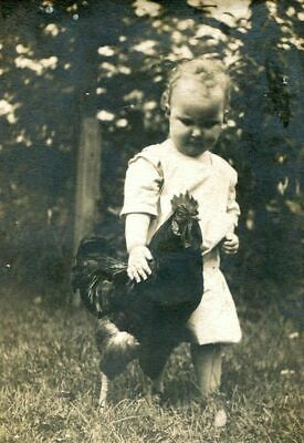 ANTIQUE MATTED PHOTO  LITTLE CHILD w ROOSTER in BARN YARD