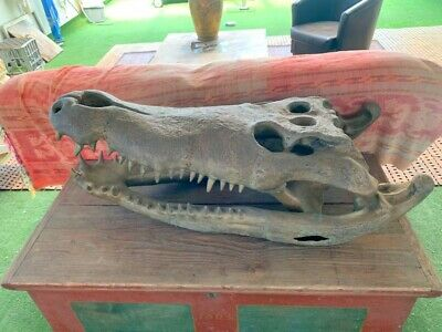 1 meter long Crocodile skull solid 100% pure hollow heavy aged brass large statu