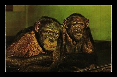 Dr Jim Stamps Us Chimpanzees Chicago Illinois Brookfield Zoo Topical Postcard