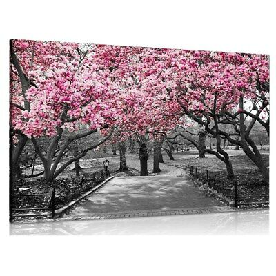 UK Black&White Pink Blossoms Art Print Picture Canvas Painting Wall Home