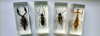 Beetles Insects 4 pcs Personality Specimen Fashion Embedded Insects Paperweight