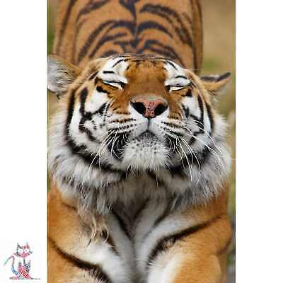 Siberian Tiger Photo Poster Coffee Cup Canvas (D0162)