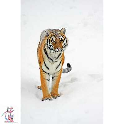 Siberian Tiger Photo Poster Coffee Cup Canvas (D0546)