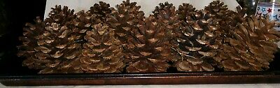 "Ponderosa Pine Cones 4"" Fresh Clean Wreath Crafts Decor Lot of 20 Washington"