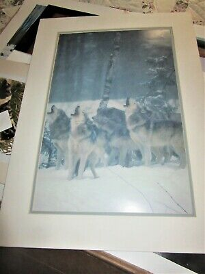 large blue wash art poater wolves howling matted 28 x 20 ""