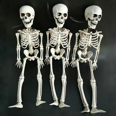 Poseable Human Life Size Skeleton Plastic Halloween Skull Model Decor Scary Prop