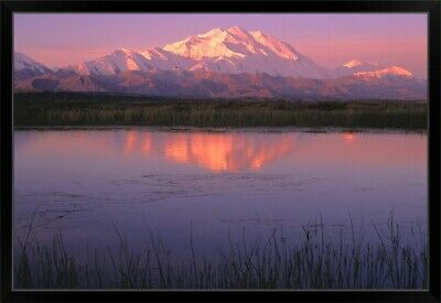 """Mt McKinley Relfected in Tundra Pond Denali NP AK"" Black Framed Art Print"