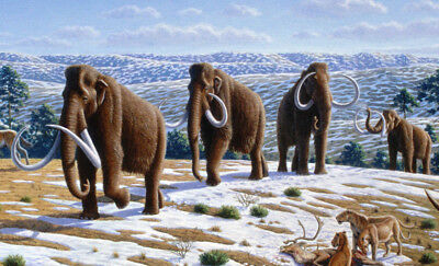 Free Economy Worldwide Screensaver Extinct Woolly Mammoth Shipping 35 Picture
