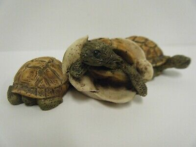 Vintage Castagna Baby Turtle Trio Hatching Egg Figurine Italy Gently Displayed