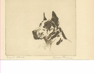* Harlequin Great Dane - 1935 Vintage Dog Print - Diana Thorne (RARE)