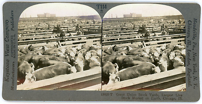 Stereo, USA, Chicago, Great Union Stock yards, circa 1900 Vintage stereo card -