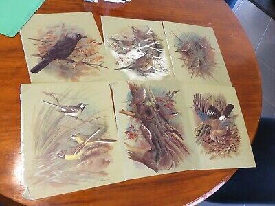 bird prints from old books great for decoupage altered art journals craft 18