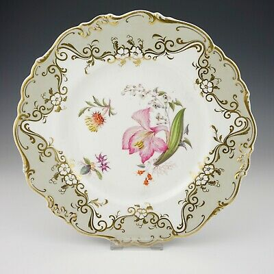 Antique English China - Botanical Flower Plate With Gilded Grey Borders