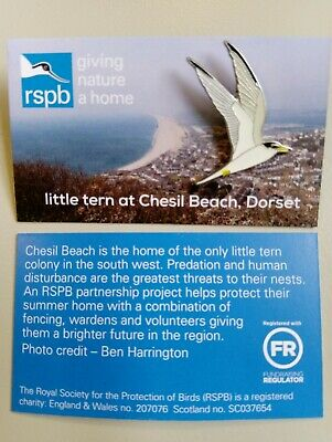RSPB Pin Badge | little tern at Chesil Beach, Dorset (01454)