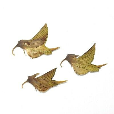 Very Unique Pressed Dried Flowers in the Form of Hummingbirds