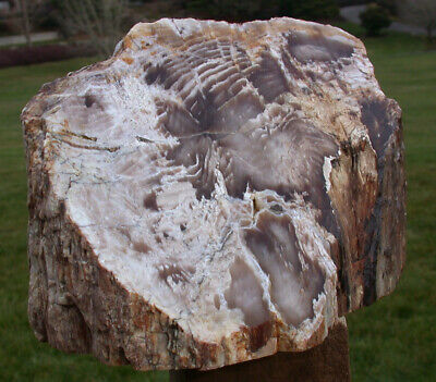 SiS: MASSIVE 8 lb. Petrified Wood Standing Sculpture from Saddle Mtn. Washington
