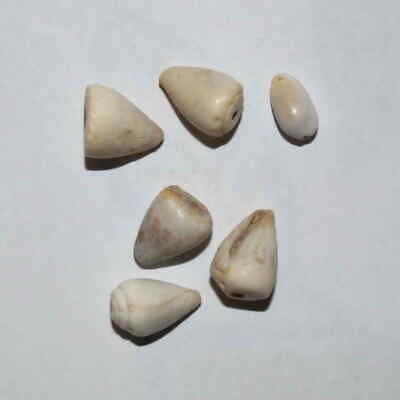 (9129) Lot of 6 Cowry shell money from Silk Road, Samarqand Soghd.