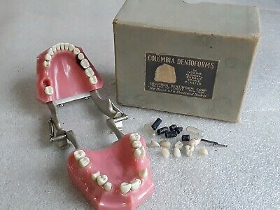 vintage COLUMBIA DENTOFORM CORP. Dental Teeth with Box Articulated jaw.