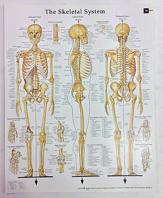 Anatomy and Pathology Book Print 2008 Small Anatomy Chart-The Skeletal System