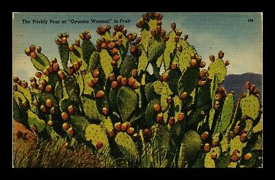 Dr Jim Stamps Us Prickly Pear Opuntia Wootoni Fruit Linen Topical Postcard