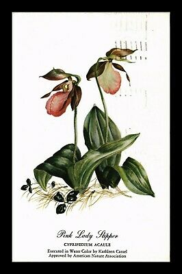 Dr Jim Stamps Us Pink Lady Slipper Flower Topical Barton Cotton Postcard