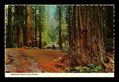 Dr Jim Stamps Us Redwood Giants California View Continental Size Postcard