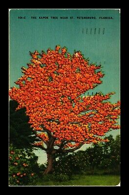 Dr Jim Stamps Us Kapok Tree St Petersburg Florida Linen View Postcard