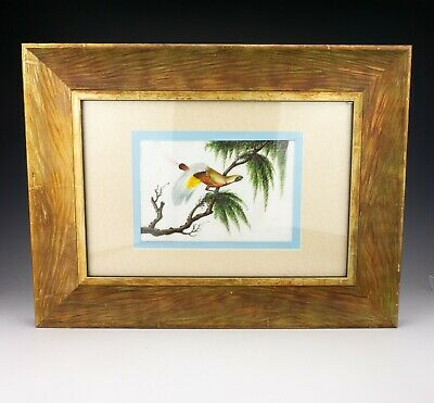 Antique Chinese Pith Rice Paper Painting - Exotic Oriental Bird In A Tree
