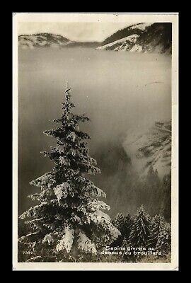 Dr Jim Stamps Trees Fog Mountain View Switzerland Cupped Rppc Postcard