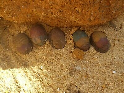 Rare Antique Ancient Egyptian 5 Scarabs Good Luck Hiroglyphic 1560-1490BC