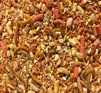 QUALITY NO MESS Wild Bird Mix No Grow Husk Free Seed Garden Year Round Pet Food