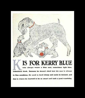 Kerry Blue Terrier - Vintage Dog Print - Clara Tice