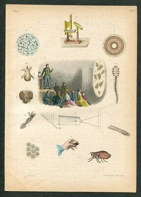 1860 Antique Hand Colored Print of Microscope Magic Lantern Microscopic Objects
