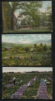 6 Vintage Early 1900's Color California Vineyard Wine Themed Post Cards