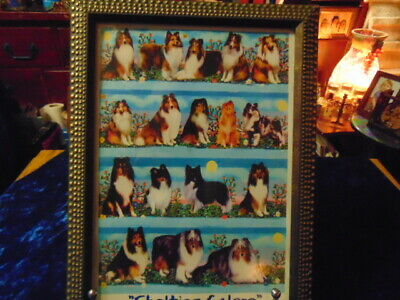 Lovely Dog Picture called 'Shelties Galore' Nice Brass Studded Black Frame