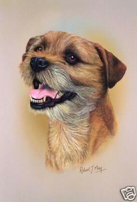 Robert J. May Head Study - Border Terrier (RMDH022)