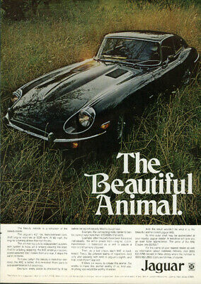 The beautiful animal. Jaguar XK-E Coupe a reflection of the beauty ad 1970 1971