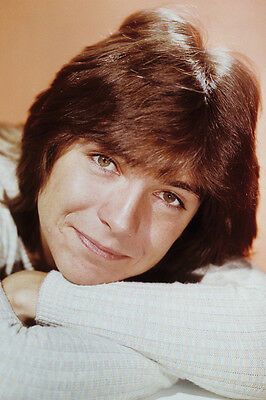 David Cassidy The Partridge Family Color 24X36 Poster