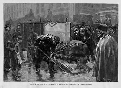 Horse  Prevention Of Cruelty To Animals 1888 Placing A Sick Horse On Ambulance