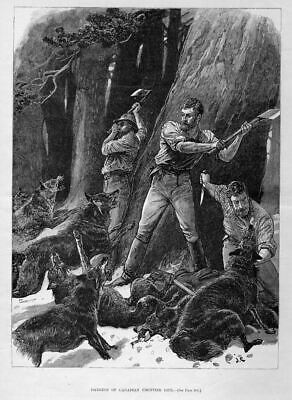 Wolves, Canadian Frontier Life Dangers, Lumbermen, Wolf