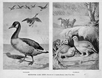 Geese, Ptarmigan, Midwinter Game Birds, Antique Goose