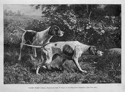 Dogs Hunting, Pointer At Work, 1885 Antique Hunting Dog