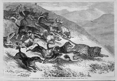 Leopard Hunting With Fox Hounds In Southern India 1869 Antique Engraving Hunt