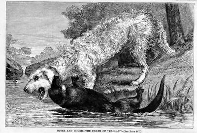 Otterhound, Dog And Otter Fight To The Death, Antique