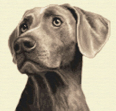WEIMARANER dog - complete counted cross stitch kit