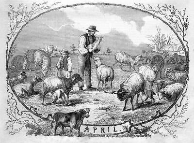 Sheep Lambs Bull Farmyard, Allegorical Picture Of April