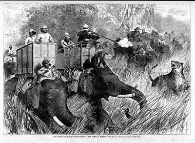 Prince Of Wales Hunting Shooting Tigers From The Elephant Basket Tiger Hunt