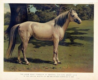 Horse Arab Pony Charger, Antique Rare Chromolithograph